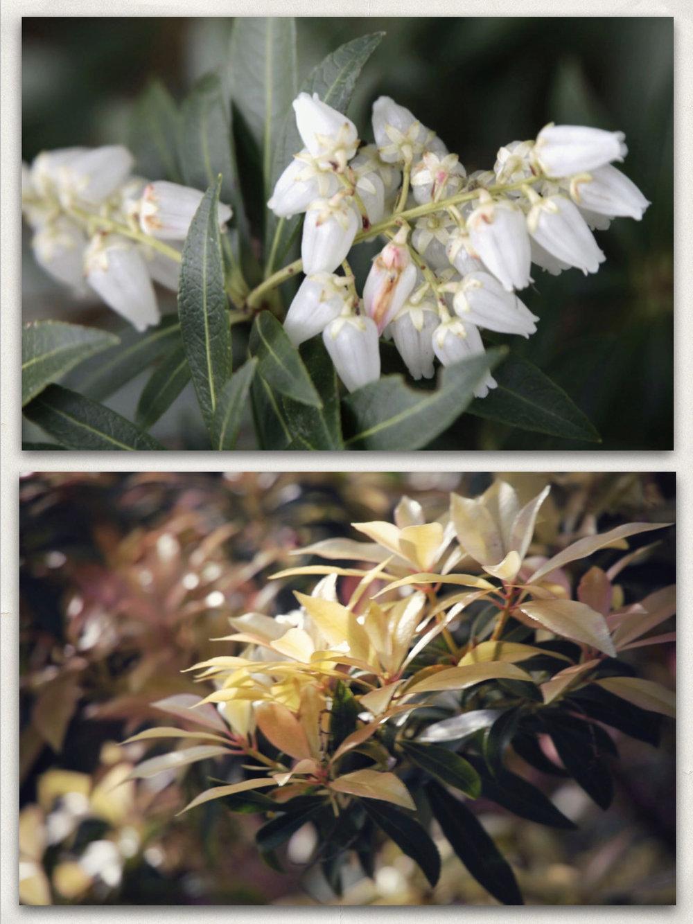 24 - Plants-c.jpg