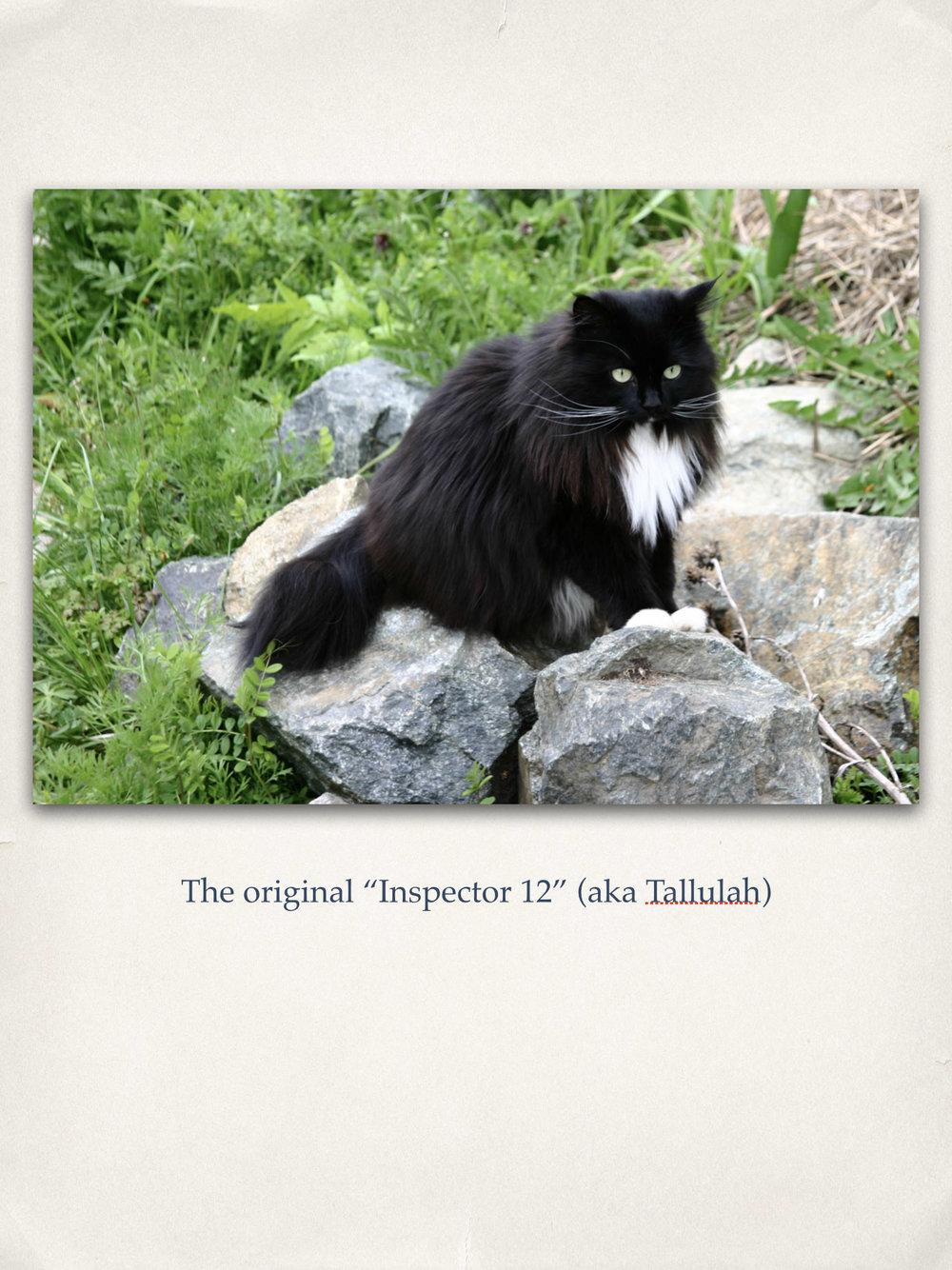 27 - Inspector 12.jpg