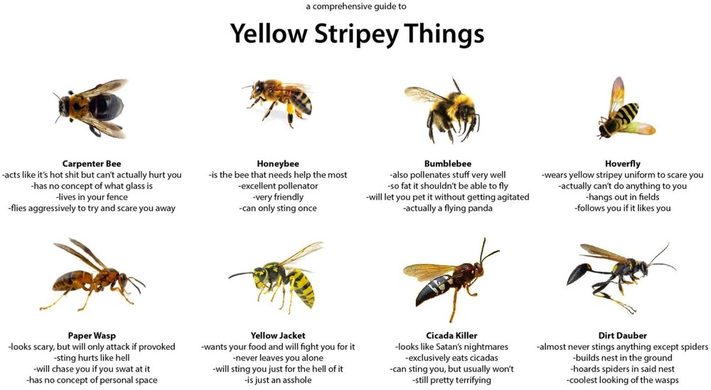 Yellow Stripey Things.jpg