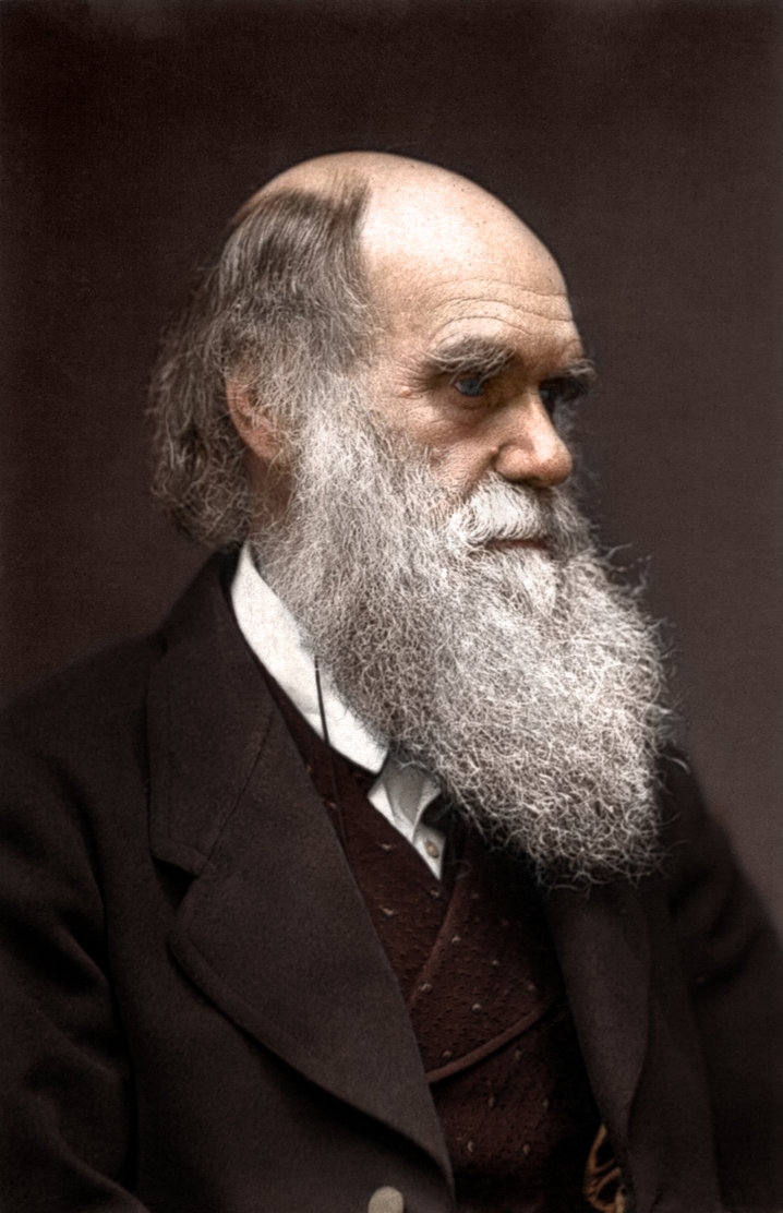 A photograph of Charles Darwin, who proposed his theory of evolution through natural selection. Photograph taken in c. 1880. Colorization by  Mads Madsen