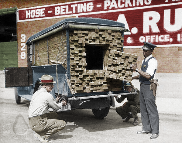 Photograph of a Federal Agent inspecting a fake lumber truck after smelling alcohol during the Prohibition Period in Los Angeles, 1926