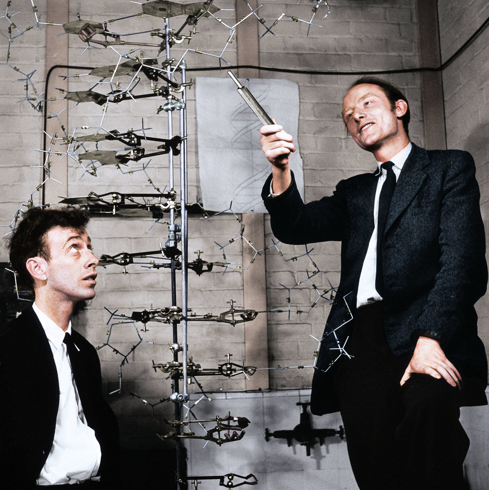 Scientists James Watson and Francis Crick looking at their DNA model located at the Cavendish Laboratory in the University of Cambridge, United Kingdom in 1953. Colorization by  Malakon