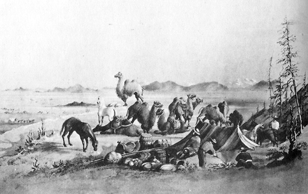An image depicting the camels of the American West.