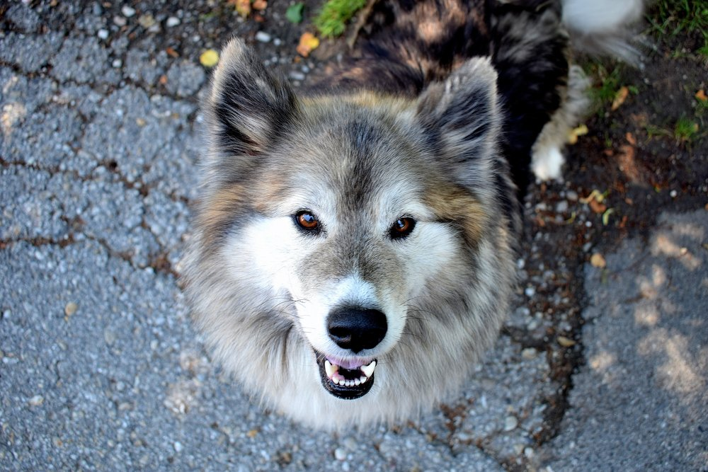 adorable-animal-breed-532423.jpg