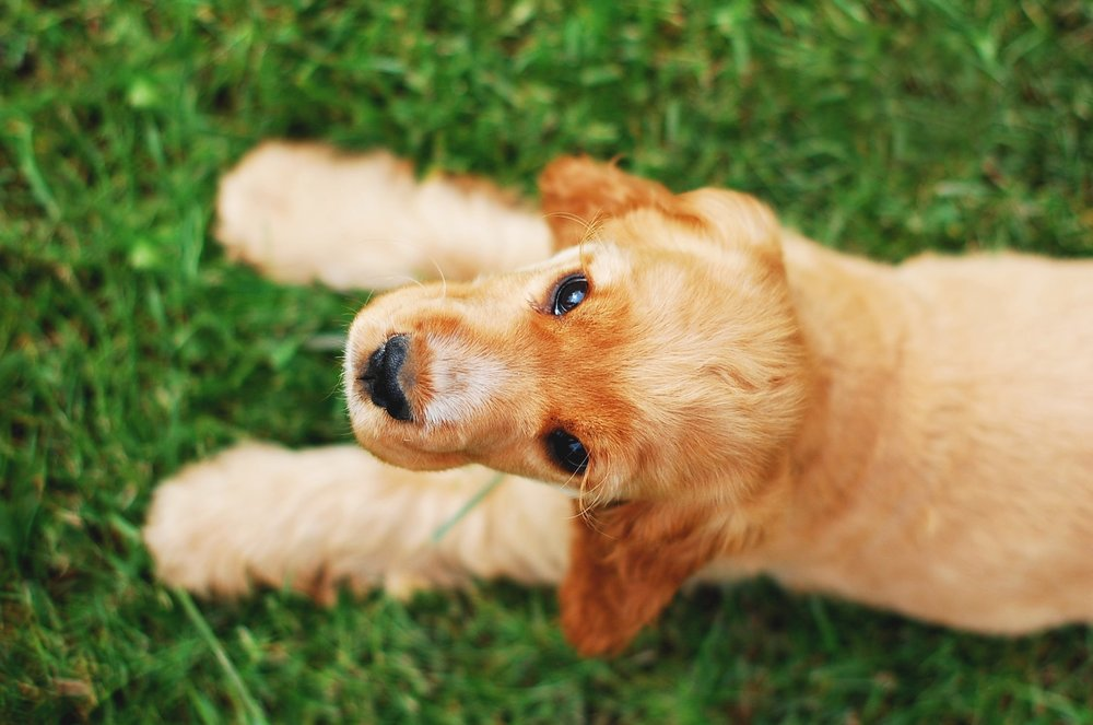 adorable-animal-breed-460903.jpg
