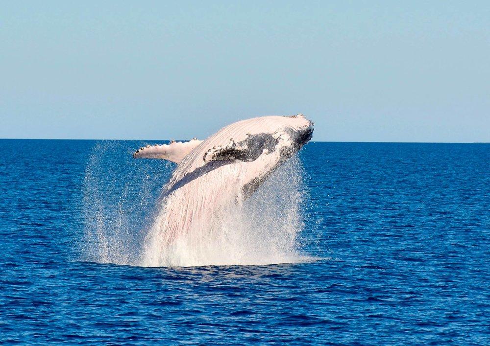 aventure-marine-baleine-noumea-nouvelle-caledonie-nc.jpg