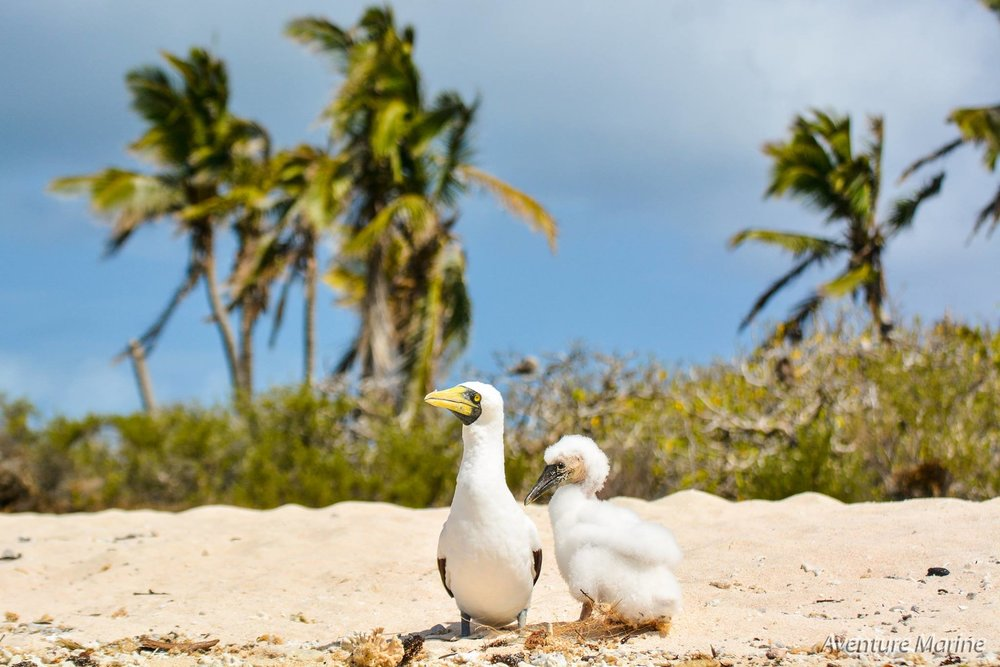 aventure-marine-oiseaux-noumea-nouvelle-caledonie-nc.jpg