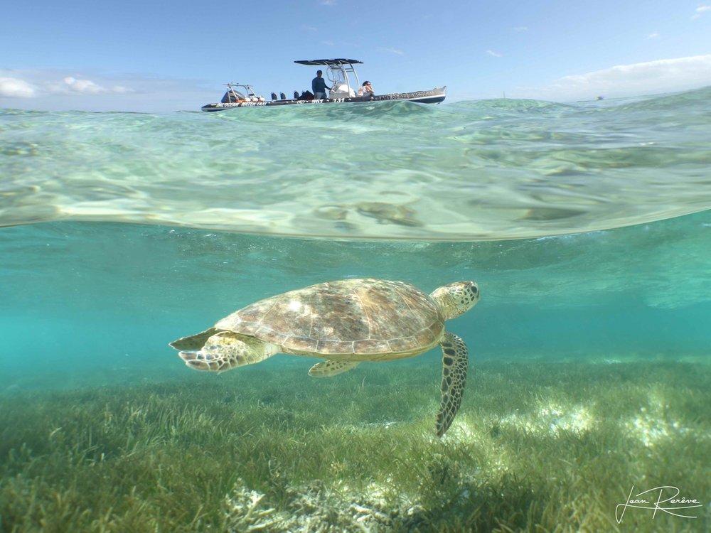 dal-ocean-tortue-noumea-nouvelle-caledonie.nc.jpg