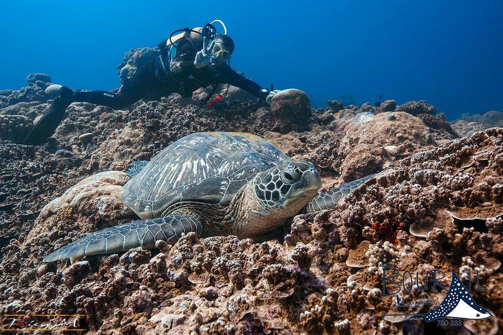 bourail-aqua-diving-tortue-noumea-nouvelle-caledonie-nc.jpg