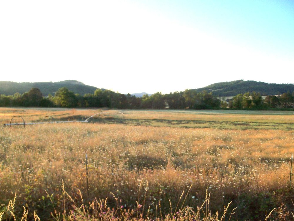 193 acres of fertile Farm land for cattle, sheep, horses or crops