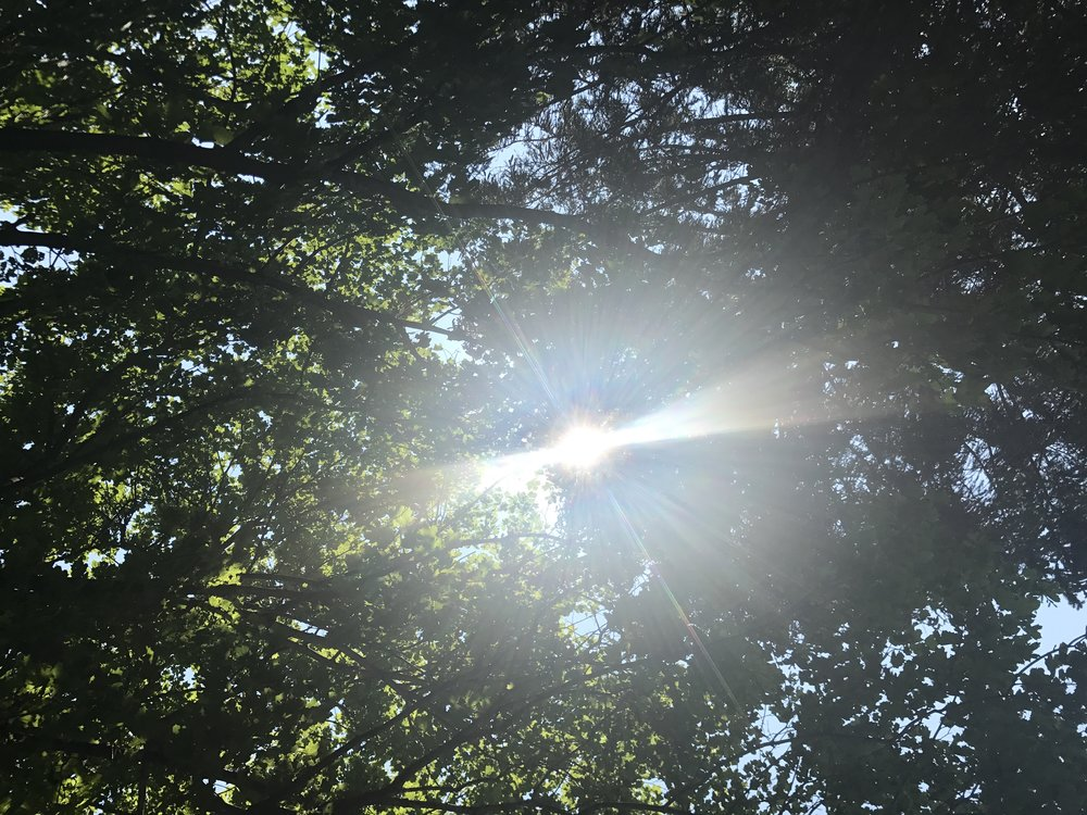 sun through trees.jpg