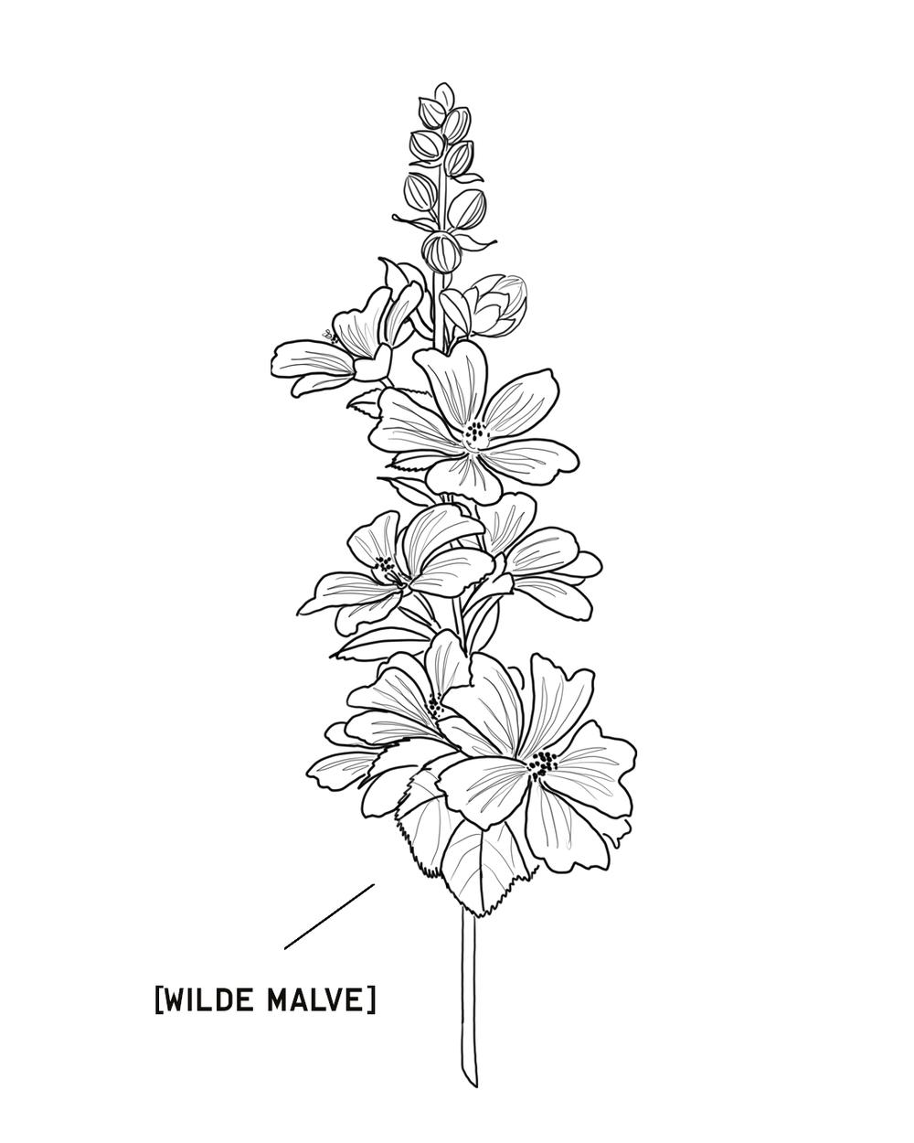 Malve-1350X1080.png