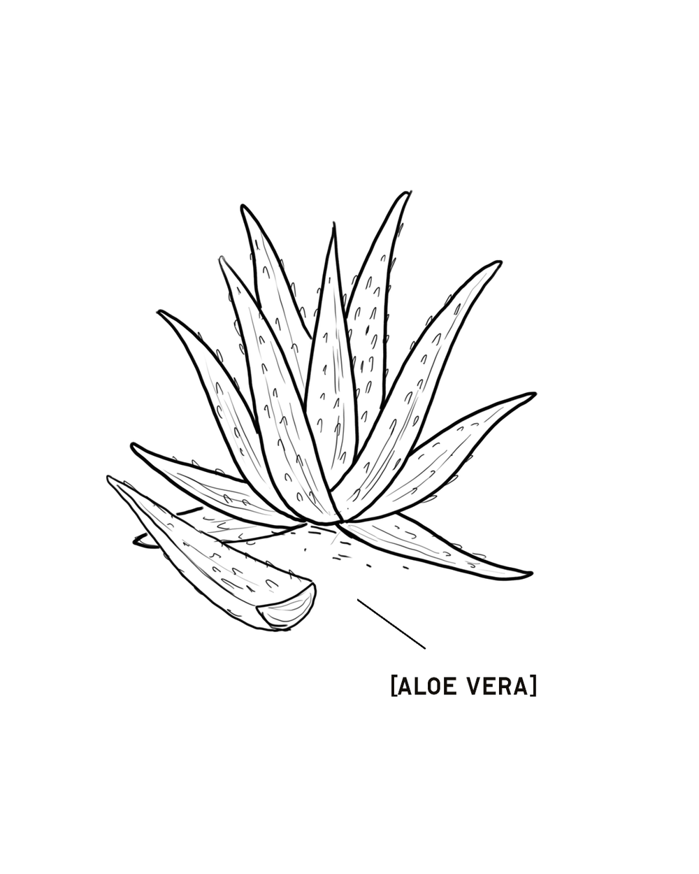AloeVera-1350X1080.png
