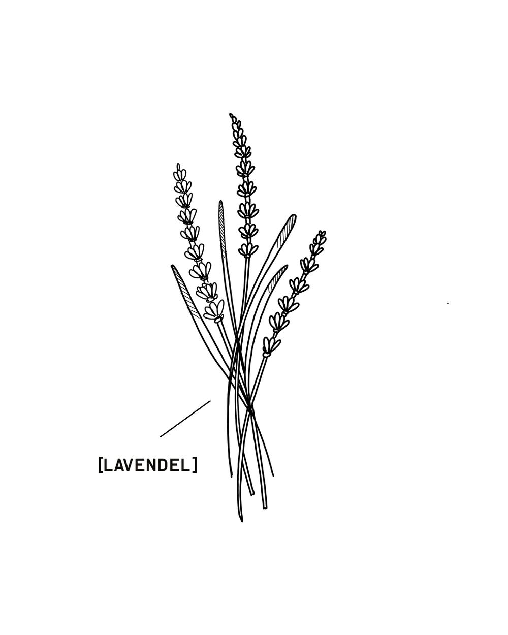 LAVENDEL-1350X1080.png