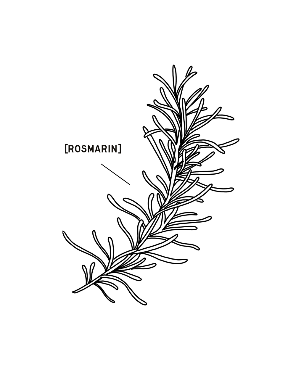 ROSMARIN-1350X1080.png