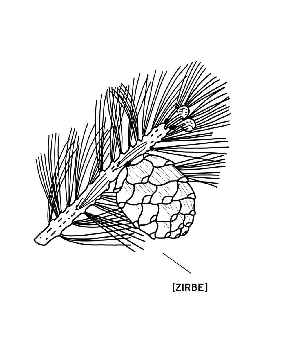ZIRBE-1350X1080.png