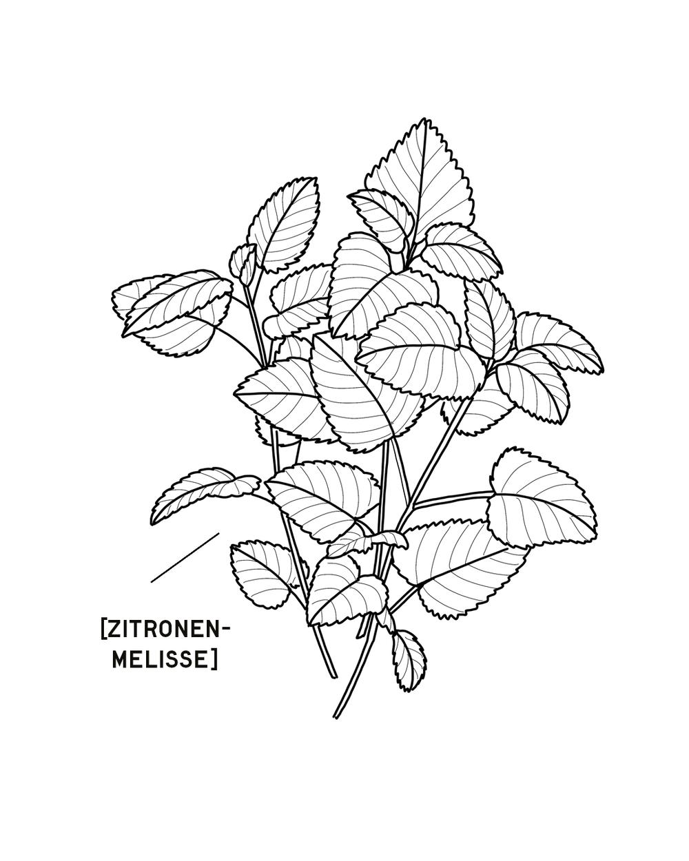 ZITRONENMELISSE-1350X1080.png