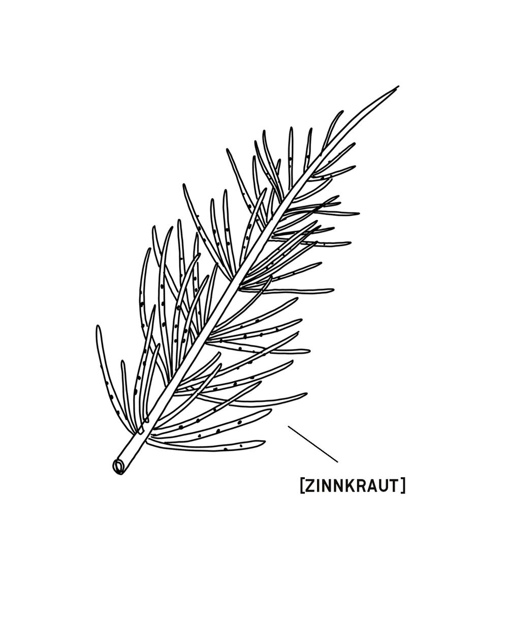ZINNKRAUT-1350X1080.png