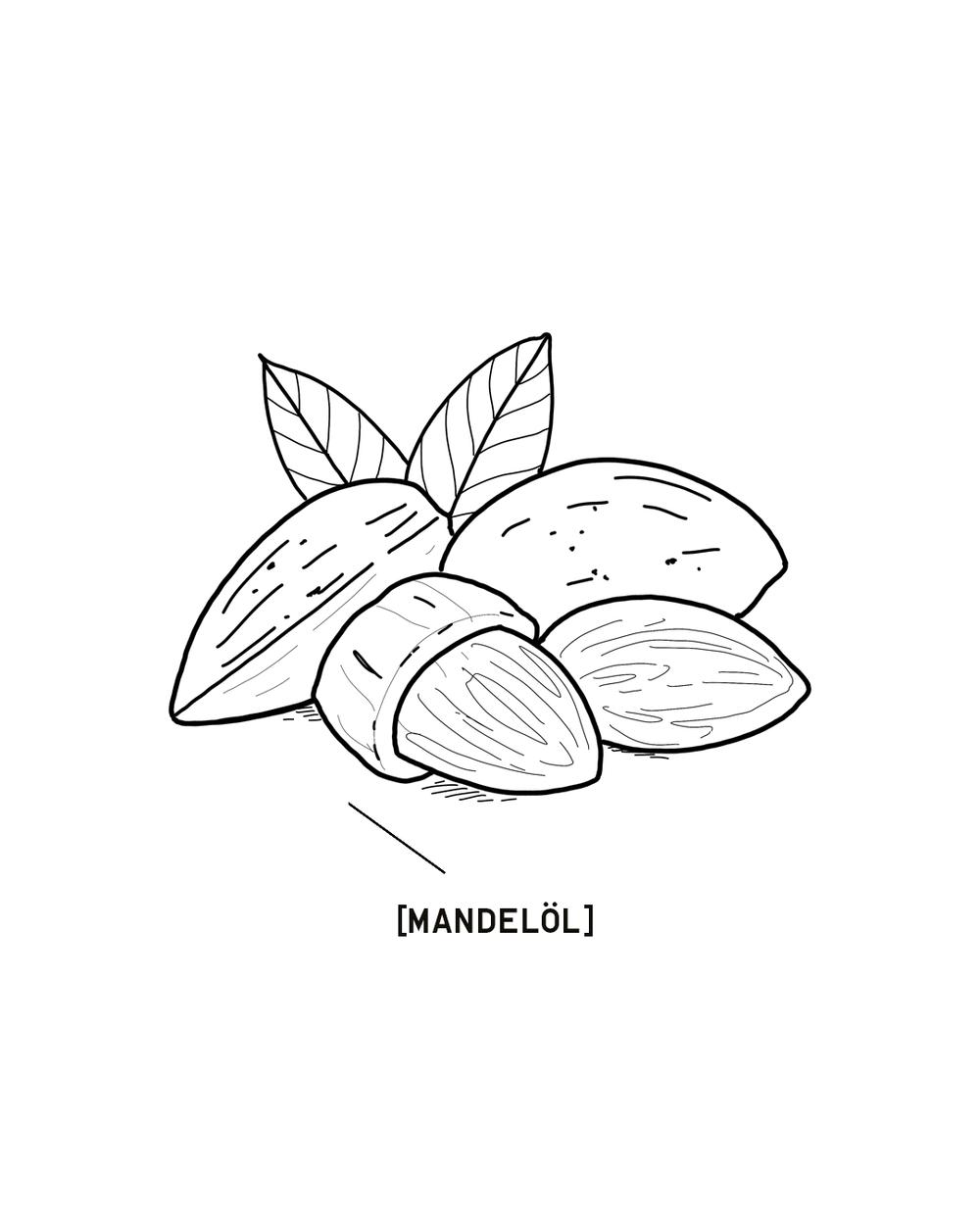 MANDELOEL-1350X1080.png