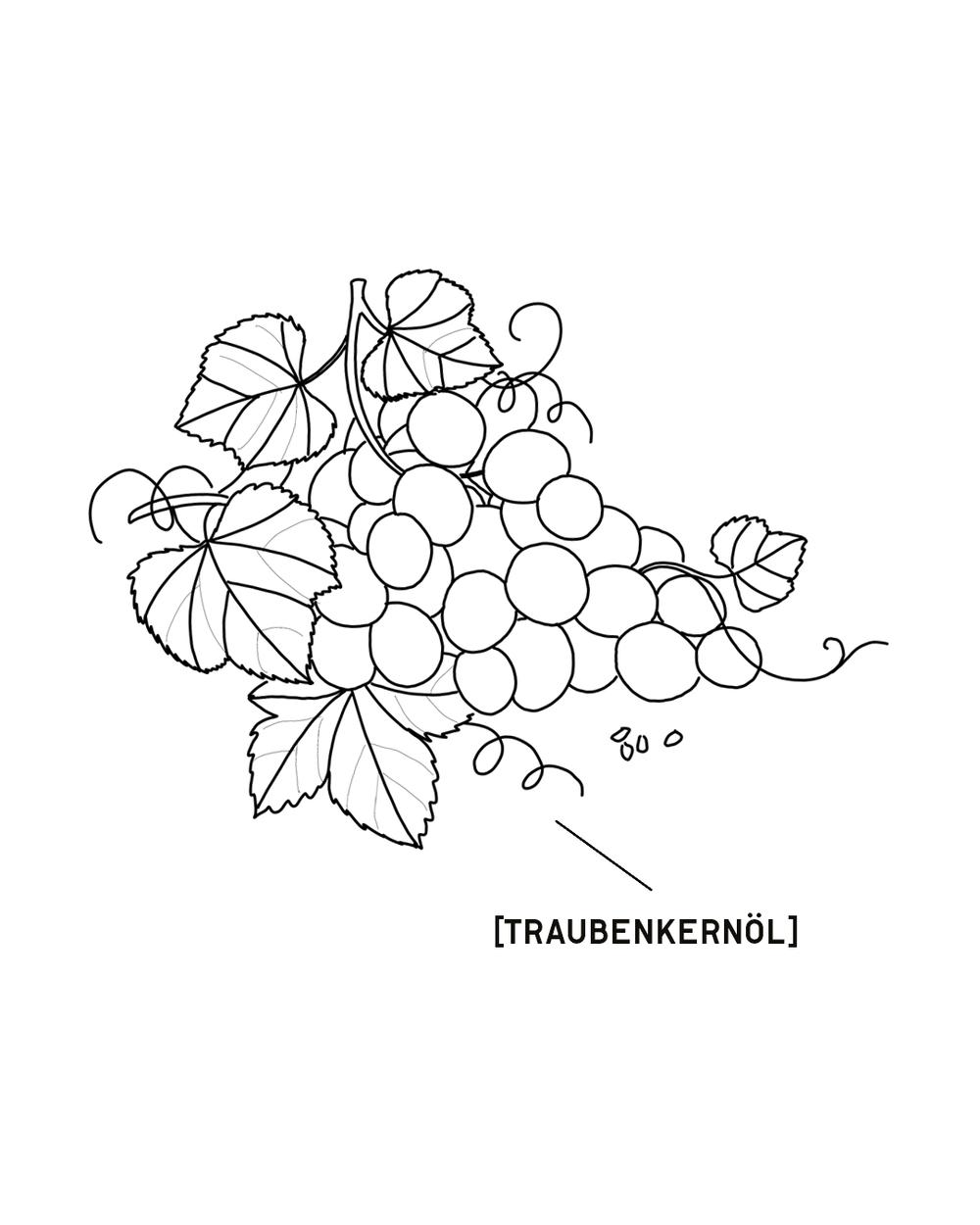 TRAUBENKERNOEL-1350X1080.png