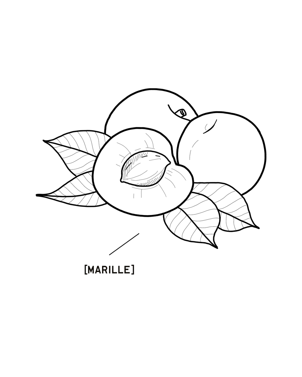 MARILLE-1350X1080.png