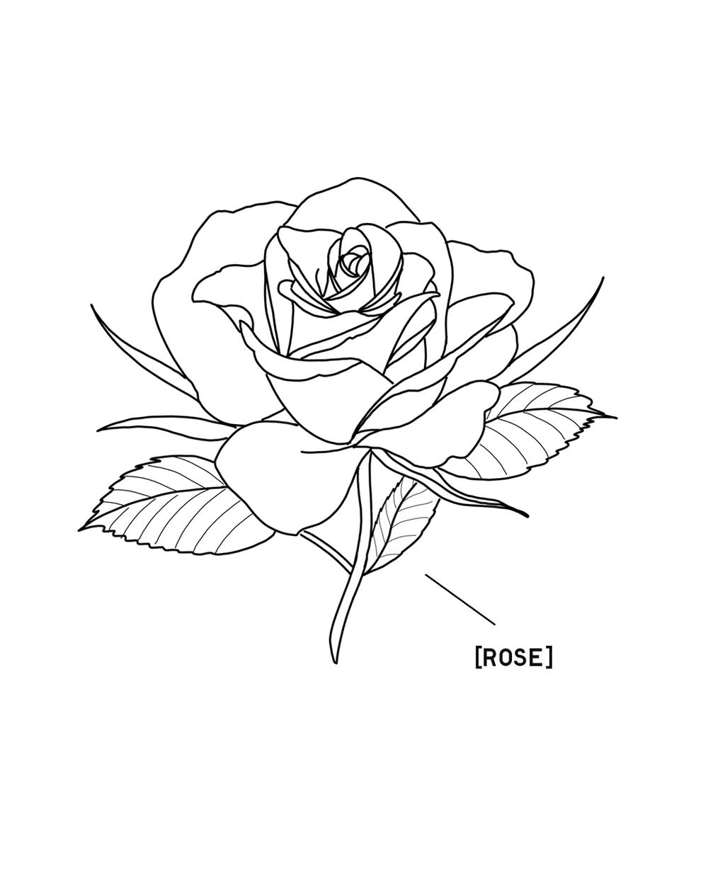 ROSE-1350X1080.png