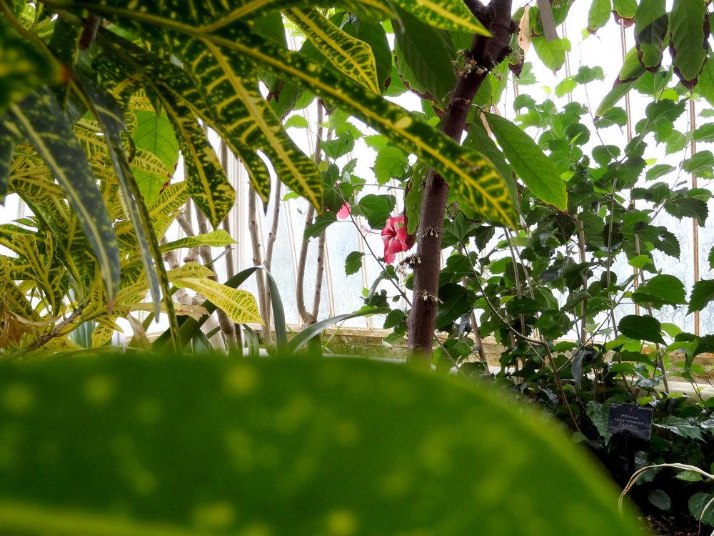 Above: Peeping through at Kew. Below: Immersing myself at the Garden of Eden, Cornwall,
