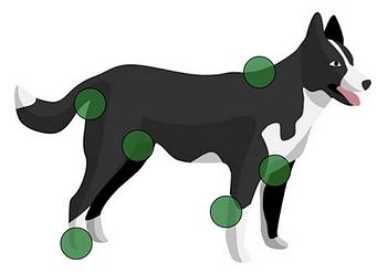 chien-tique-zone-prevention