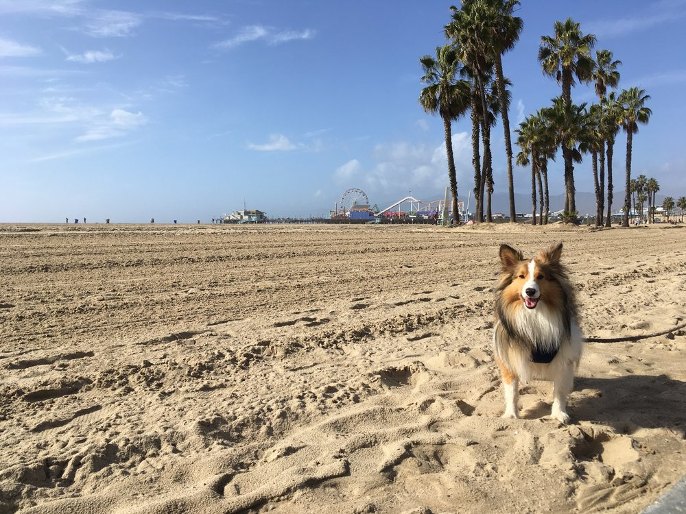 camping-chien-randonnee-usa-expedition-canine-californie