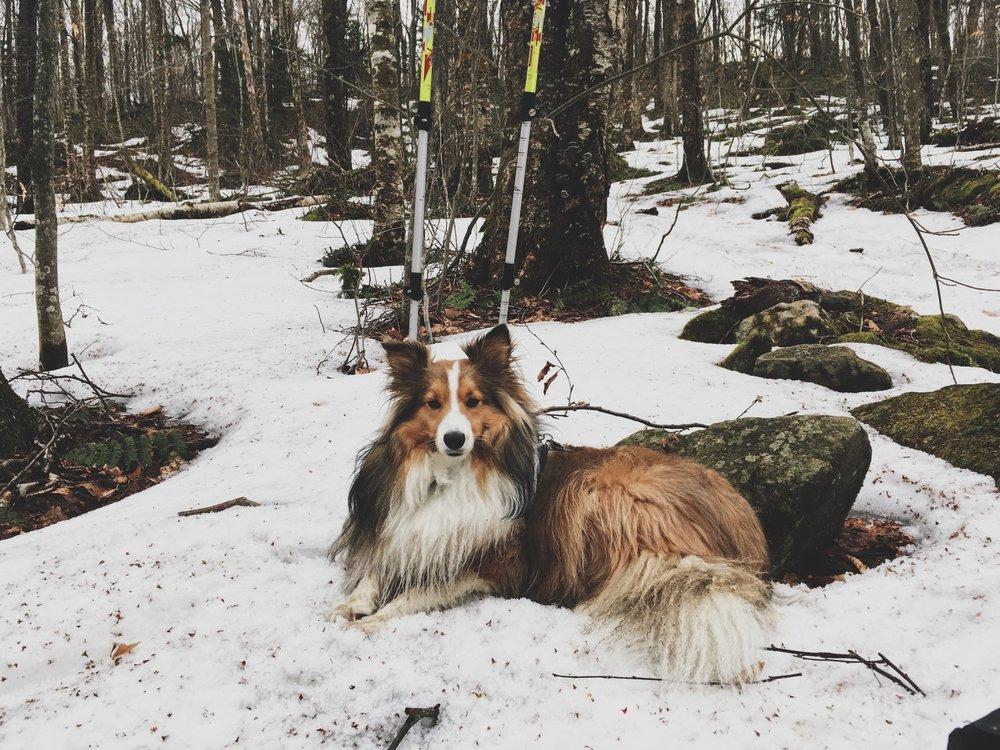 bucklin-trail-killington-peak-usa-randonnee-chien-expedition-canine