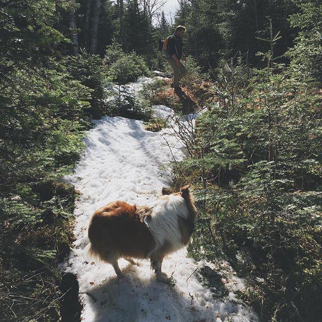 Un petit chien 4x4, neige, bouette, eau... il n'y en a pas de problème (contrairement à son humain qui a trouvé ça plus difficile) 🏔