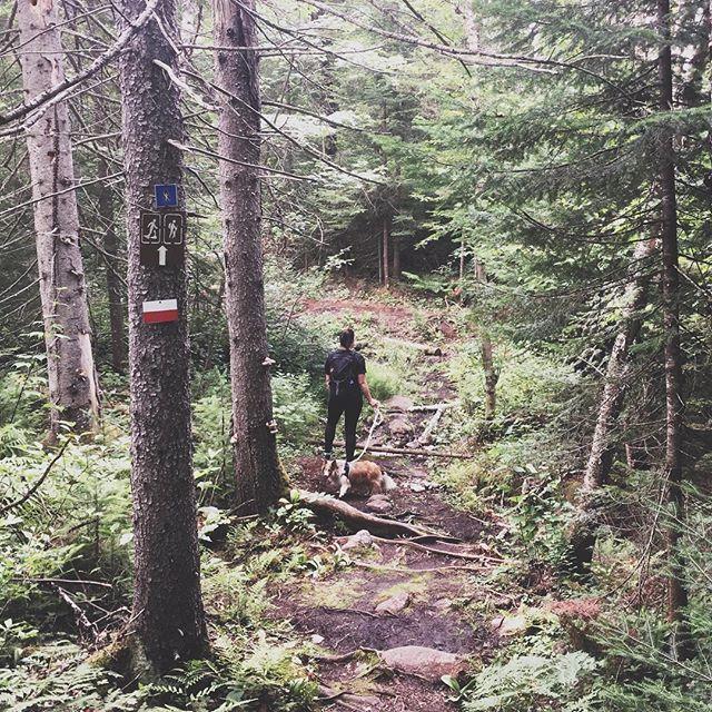 À la découverte de la Forêt Ouareau! 🐶🌲