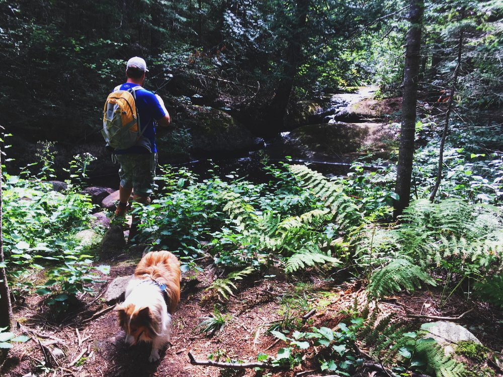 foret-ouareau-expedition-canine-chien-randonnee-3.jpg