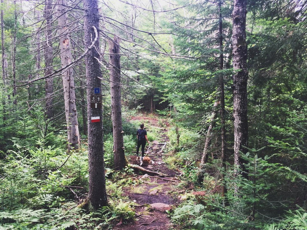 foret-ouareau-expedition-canine-chien-randonnee.jpg