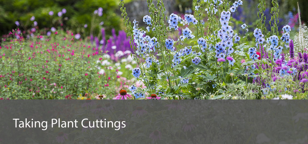 cuttings_r.jpg