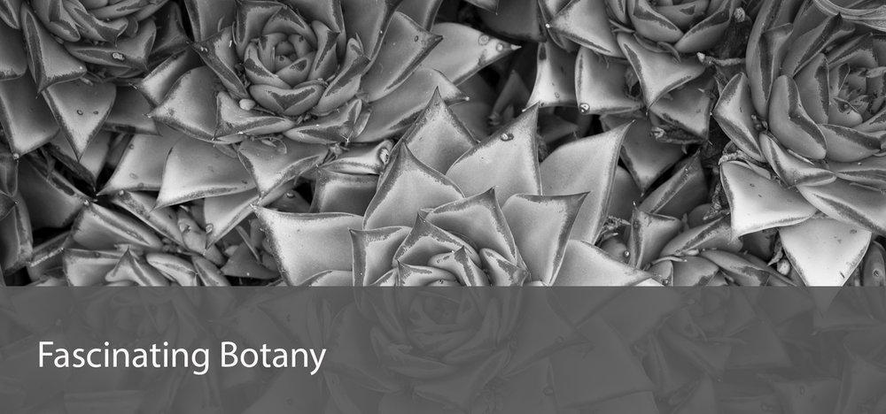 botany_r.jpg