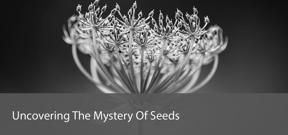 seeds_r 2.jpg