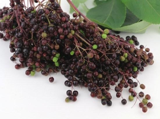 Berries-1-e1454699941217.jpg