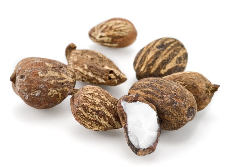 Shea-Nut-Oil-Image-1.jpg