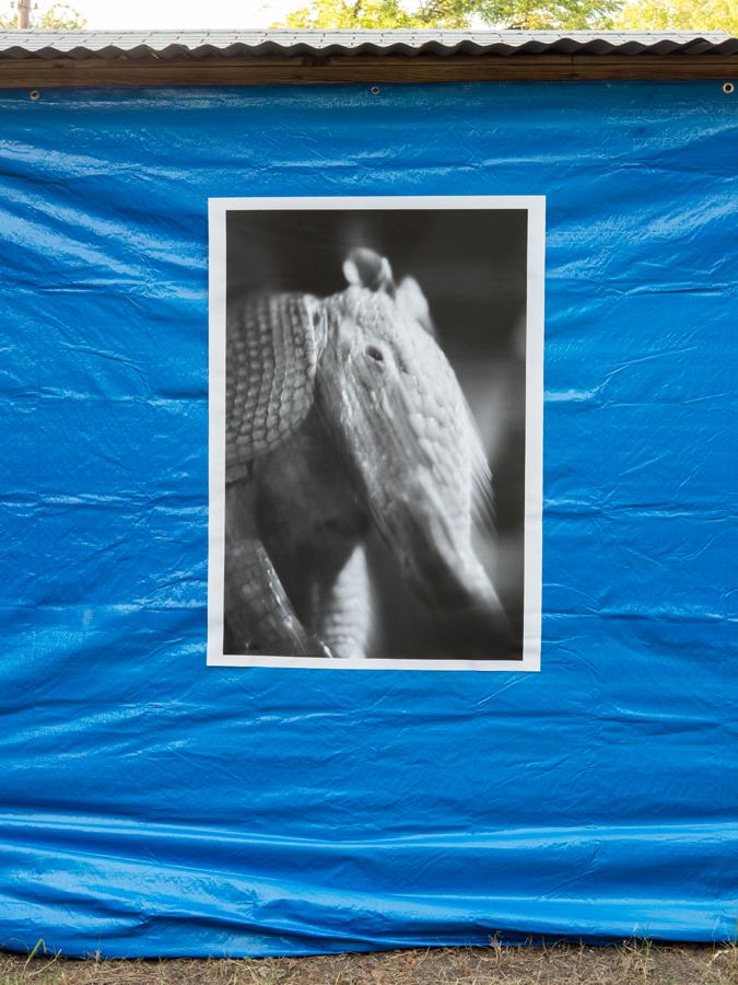 """Bucky Miller   …  inkjet print  28"""" x 42"""", 2018"""