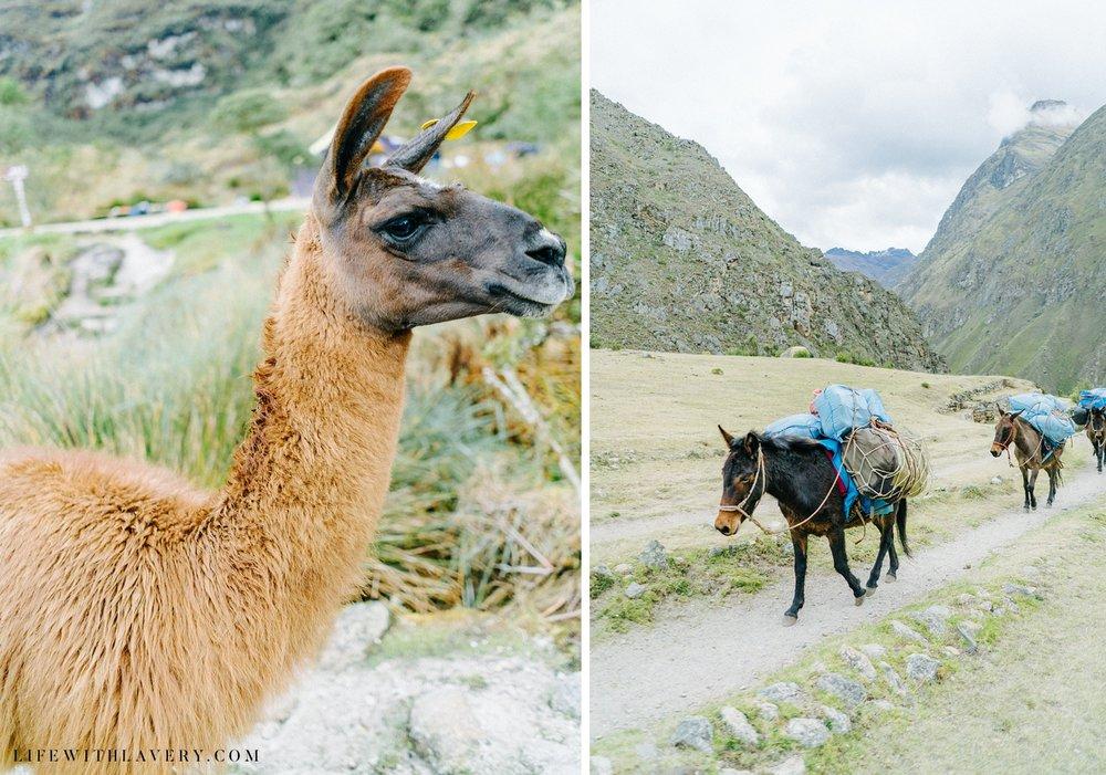 inca-trail-peru-travel-blogger-tips_0003.jpg