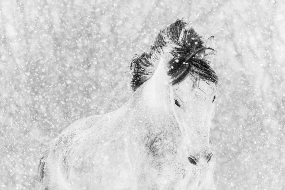 Winter Frolick