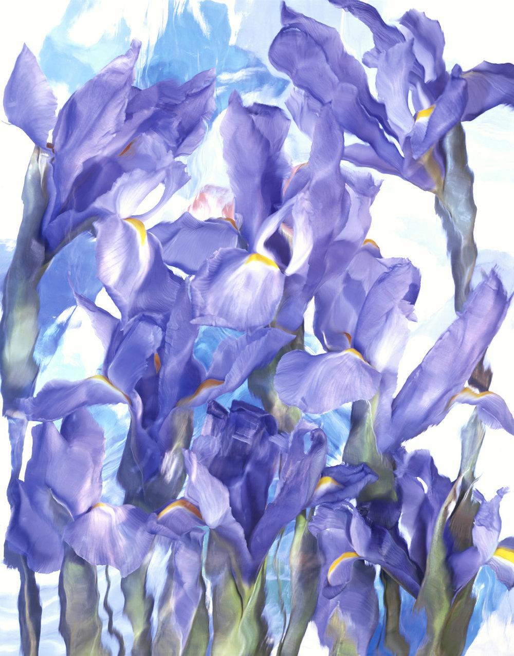 Tapestry Iris