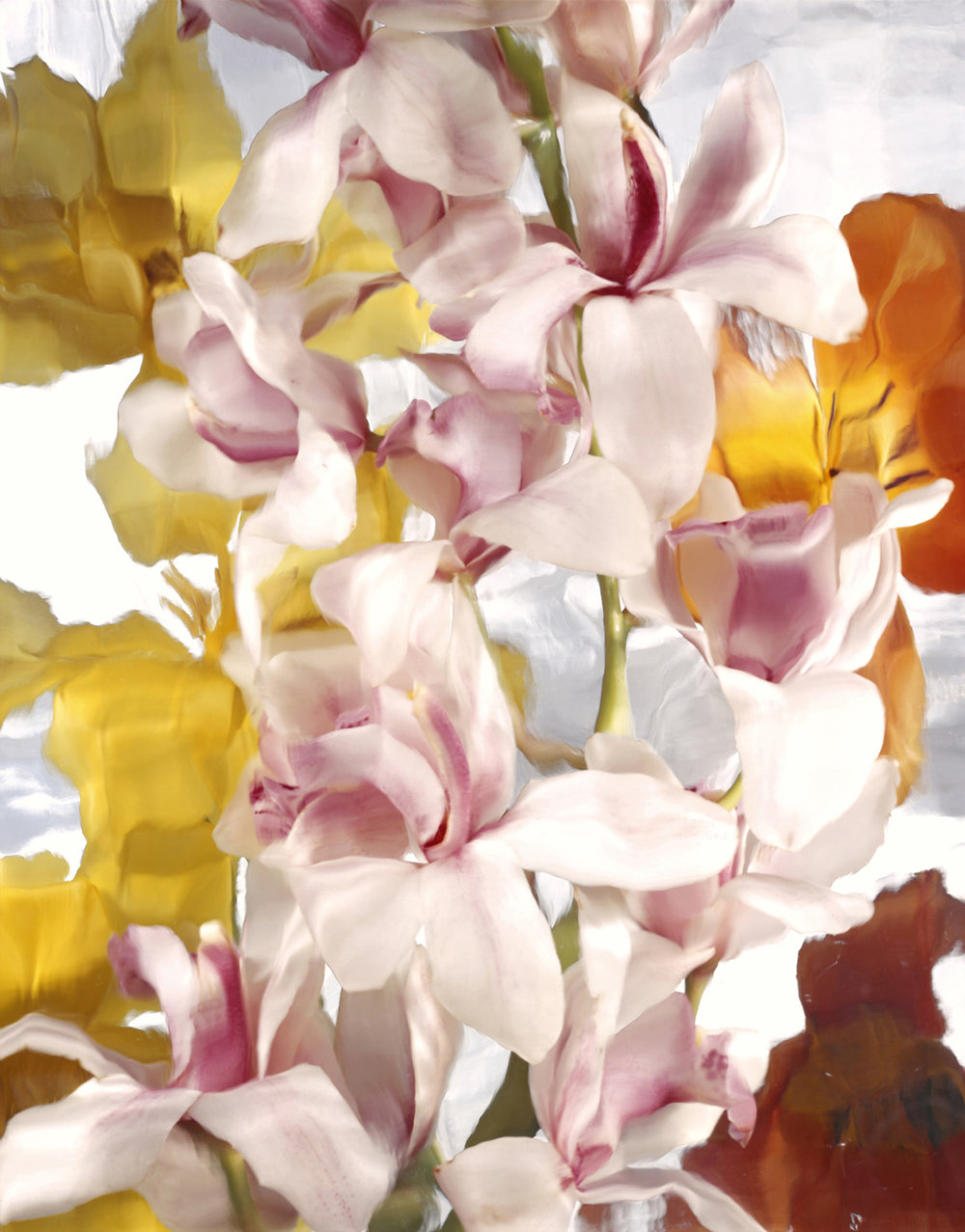 Tapestry White Orchids