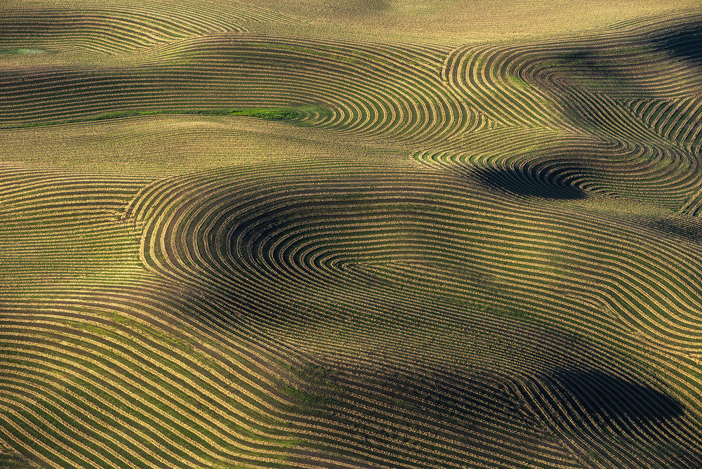 View of the Palouse, Washington, USA - 2018
