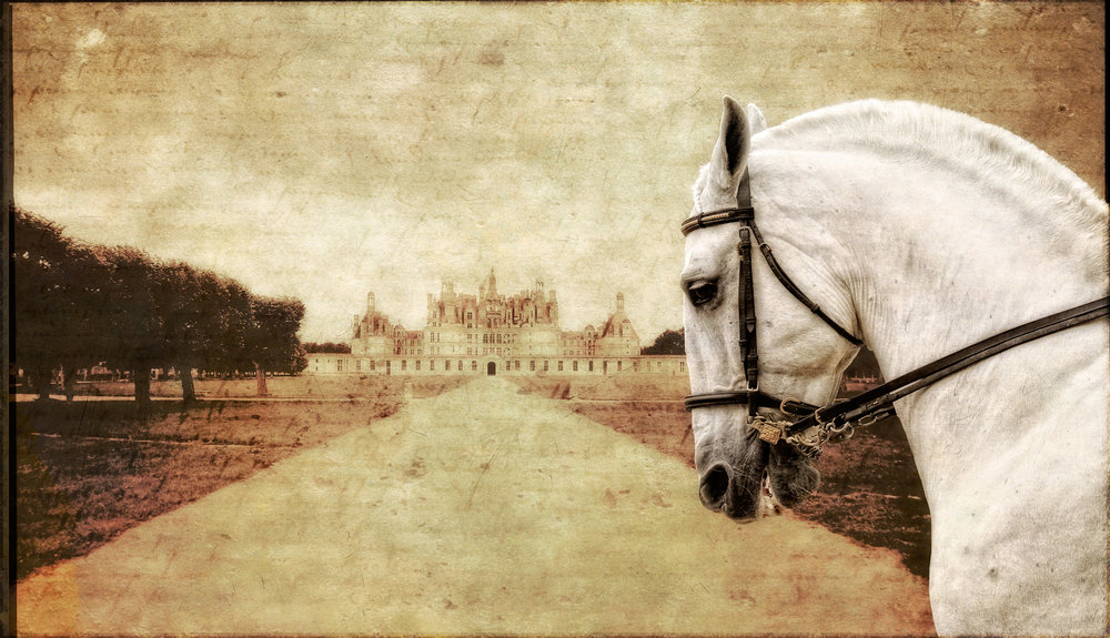 Royal Stallion