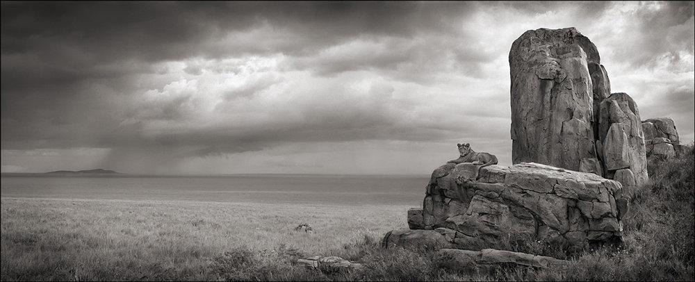 Lion with Monolith, Serengeti, 2008