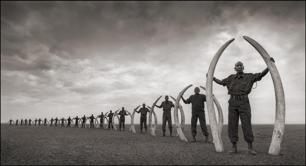 Rangers with Tusks of Killed Elephants, Amboselli 2011