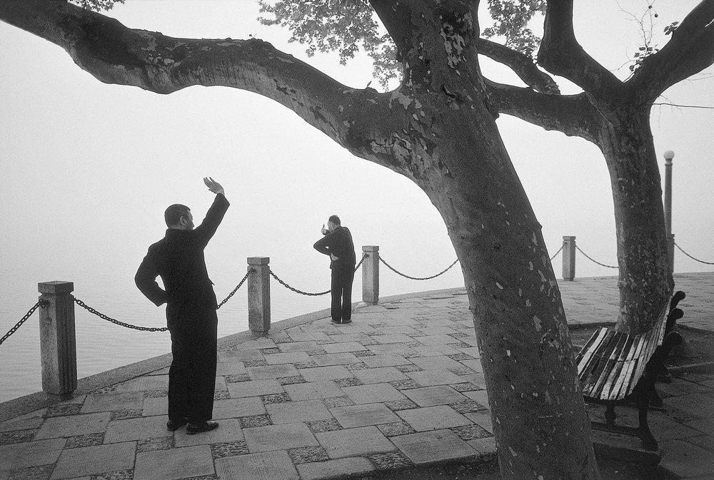 Tai Chi Trees