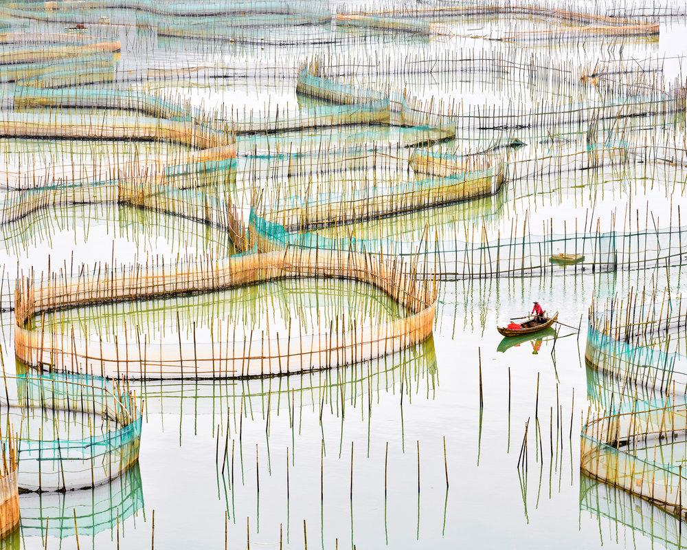 Nets 1 Fujian, China 2016